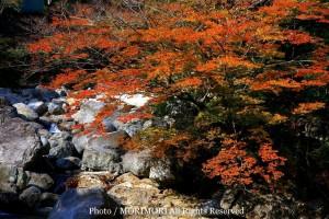 九州 紅葉 宮崎 見立溪谷