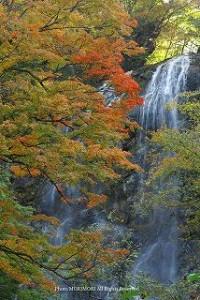 九州紅葉宮崎白滝